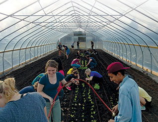 U-M students work in a greenhouse